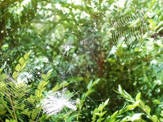 web with spider