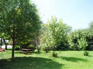 three maple trees