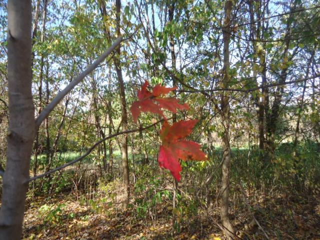 Tree Garden Gallery