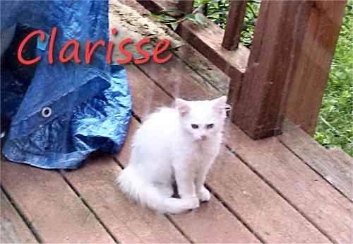 Update on Outside Kitties