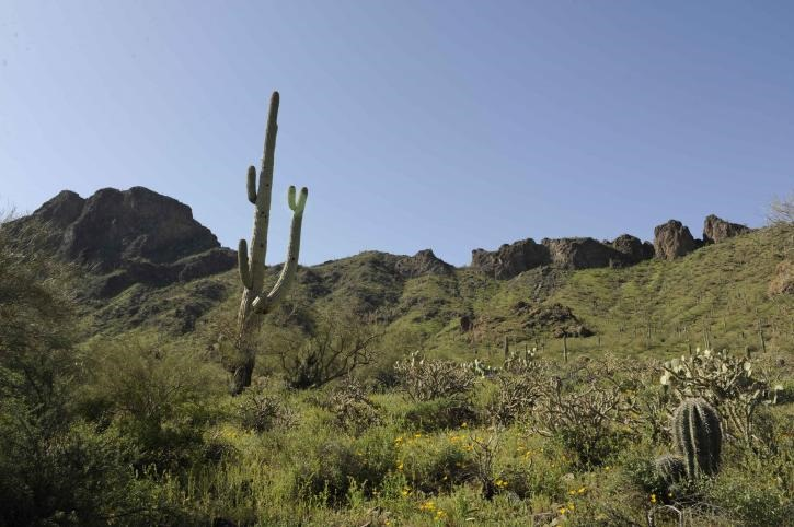 vegetation-in-the-sonoran-desert-on-the-cabeza-prieta-national-park-725x482.jpg