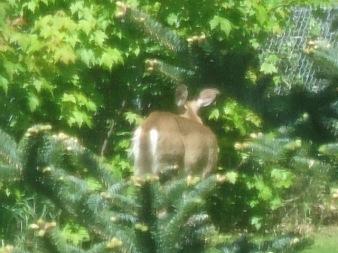 very odd deer