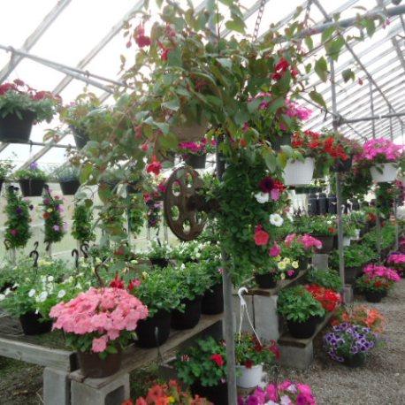 Schulz' greenhouse