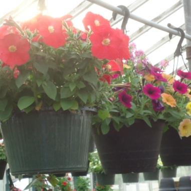 greenhouse baskets