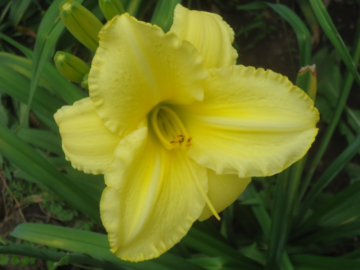 yellow good