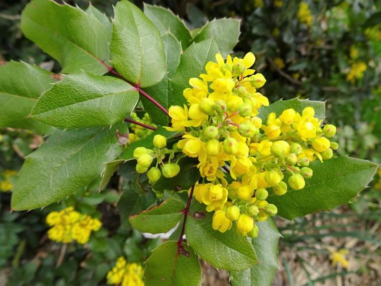 close up good yellow