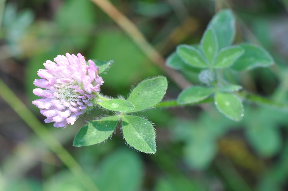Wildflower Aliens, thanks to The Big Wooden Tent…for there-blog.