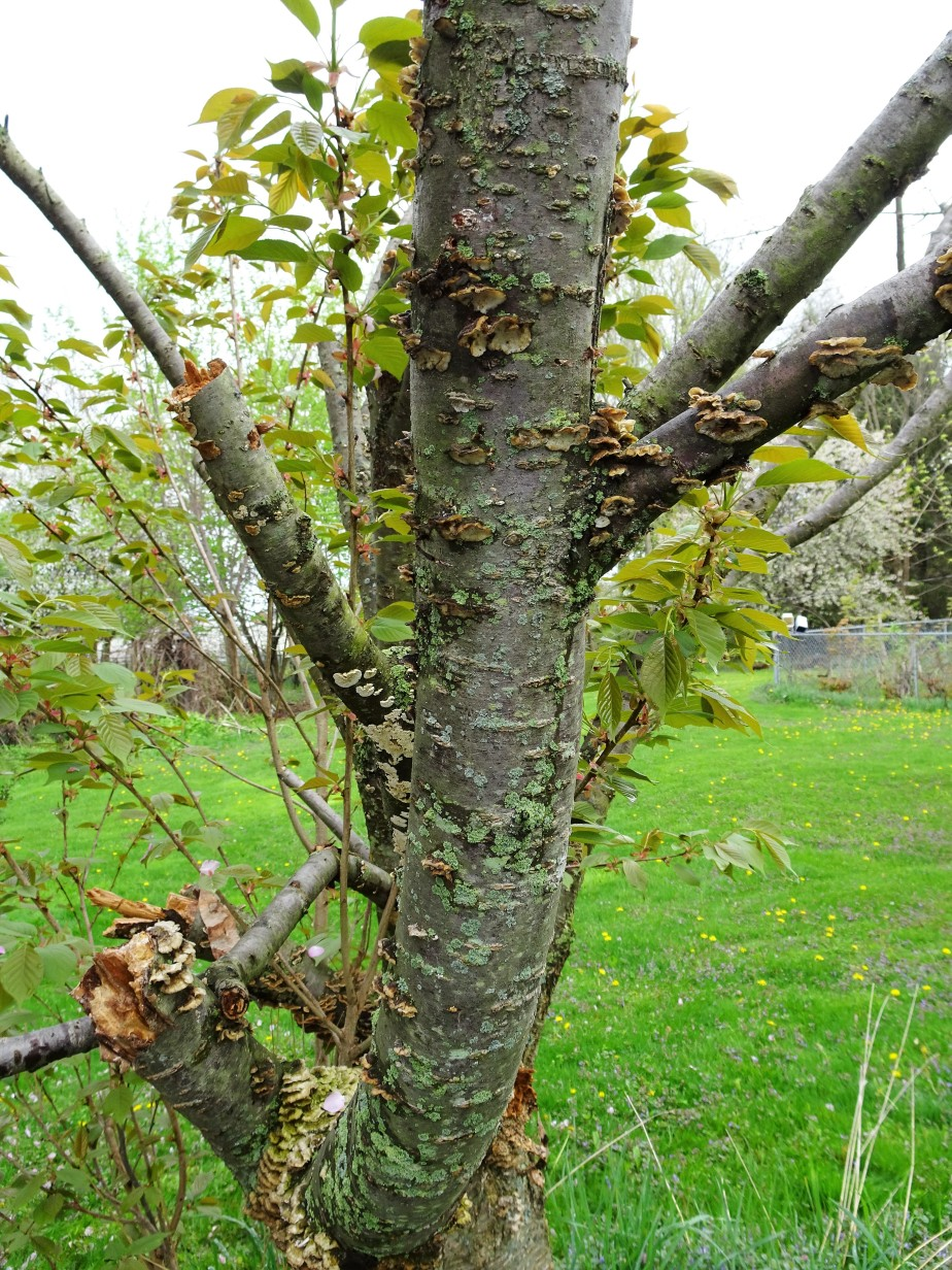 TREE NEW N OLD