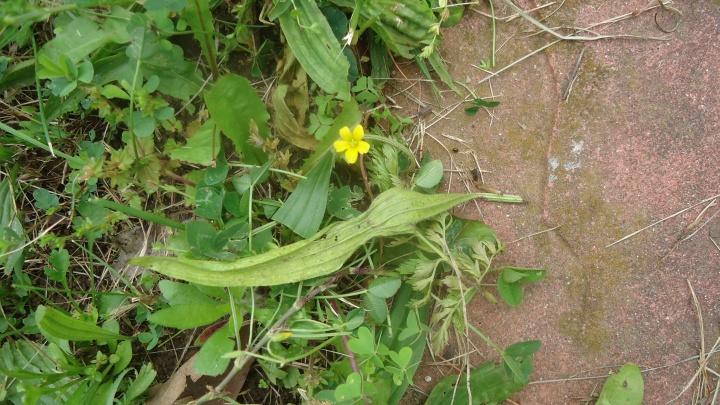 ants w yellow flower