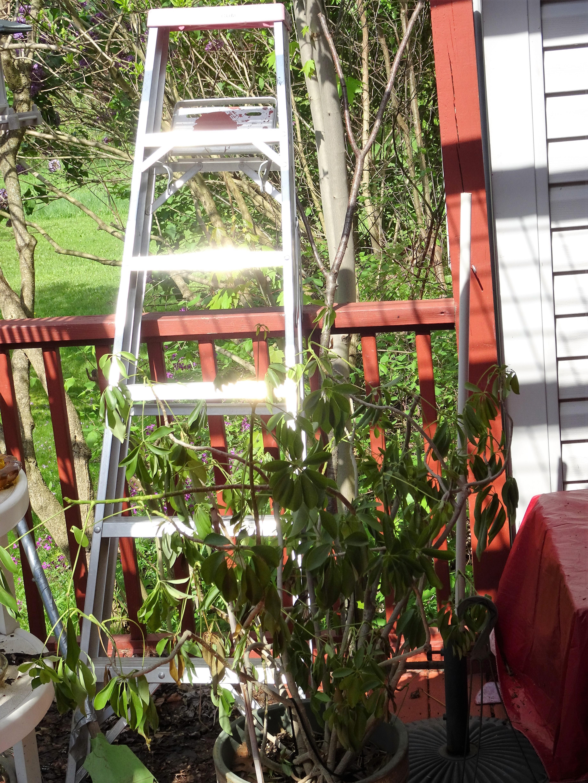 sparkiling ladder