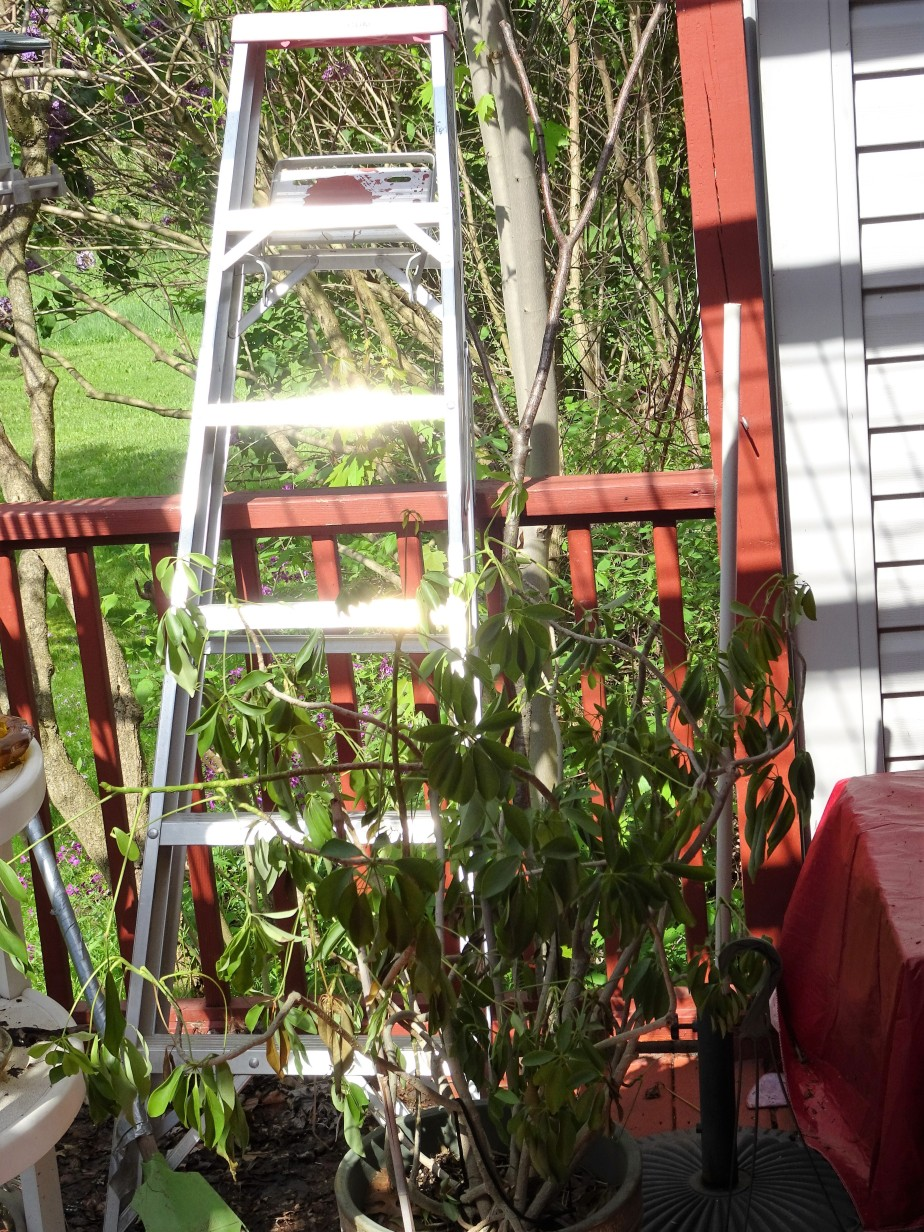 sparkiling ladder