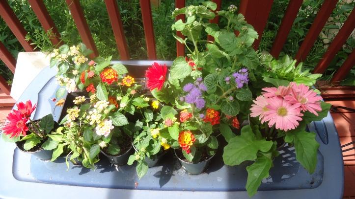 plants on top.JPG