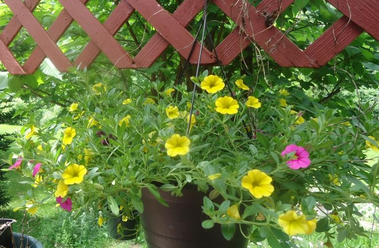 yellow mill bells