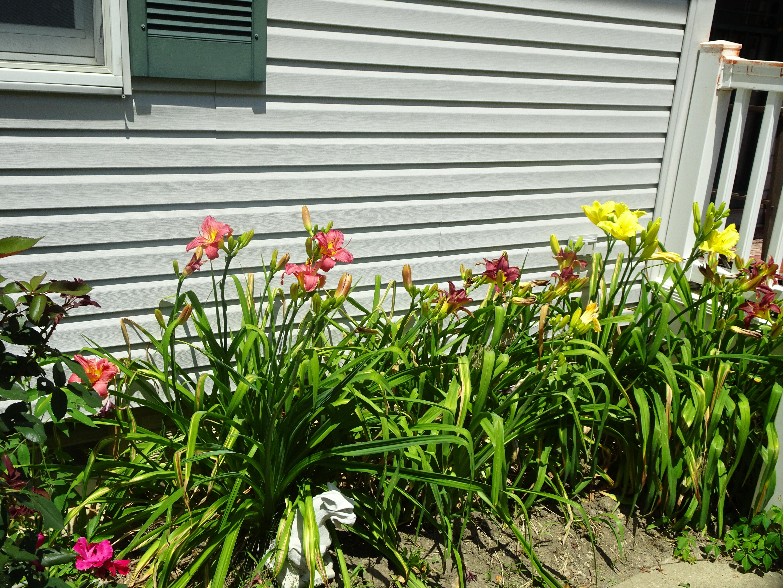 corner lily bed