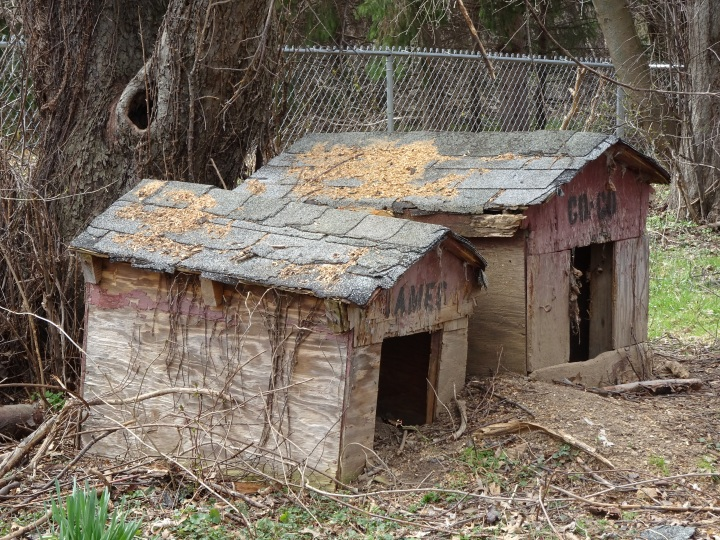 dog houses good.JPG