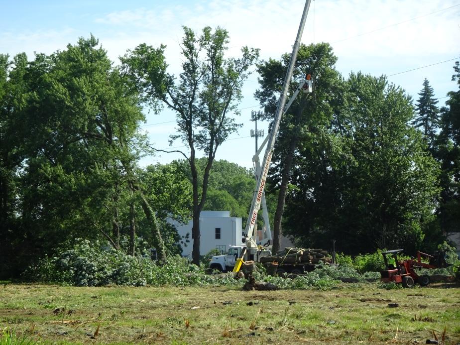DSC02374.JPG TREES STILL THERE