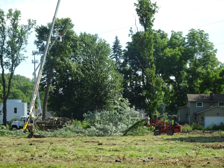 DSC02376.JPG VERY GOOD SHOT OF TREE GOING TO CHIPPER