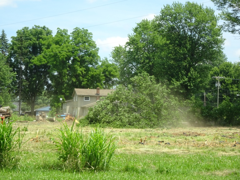 DSC02418.JPG tree down w dust