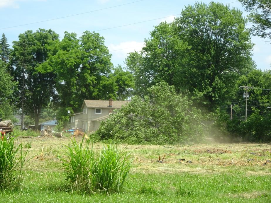 DSC02418.JPG tree down w dust