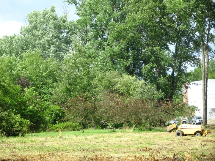 DSC02493.JPG NORTH TALL TREE LITTLE MACHINES
