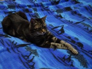 Toby likes Blue